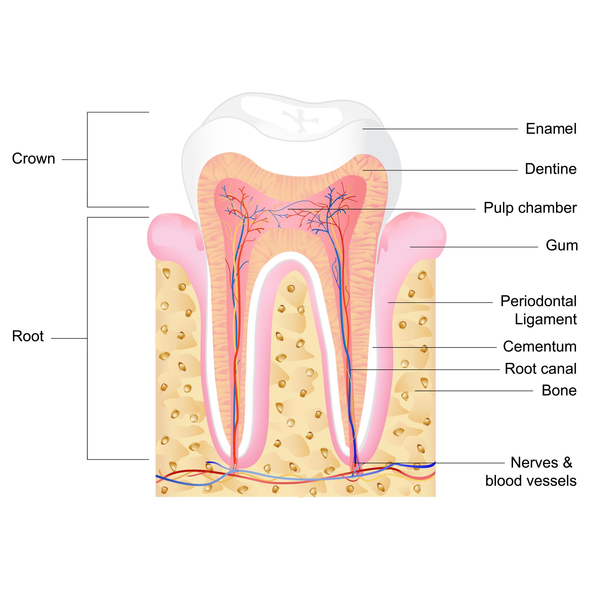 Where do I go for Endodontics Kendall?